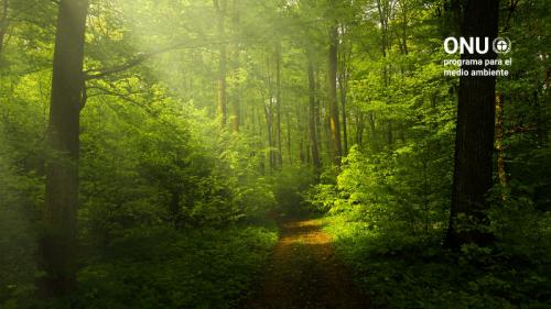 Bosques #PorLaNaturaleza