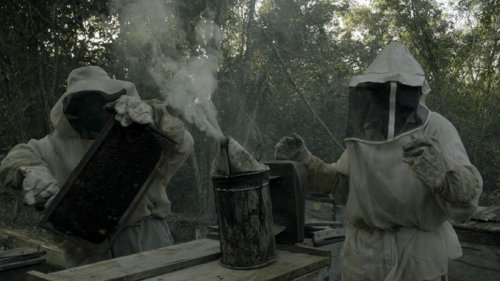 WHAT HAPPENED TO THE BEES?