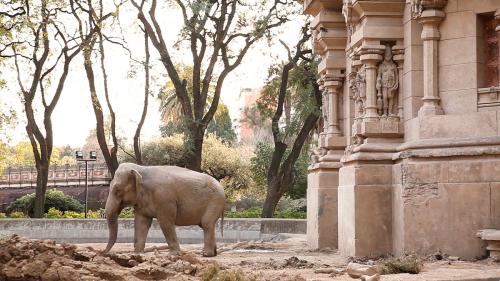 Mara, the Elephant's Journey