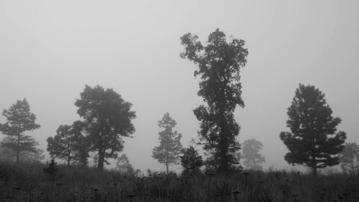 '.Trees Die Standing Tall.'