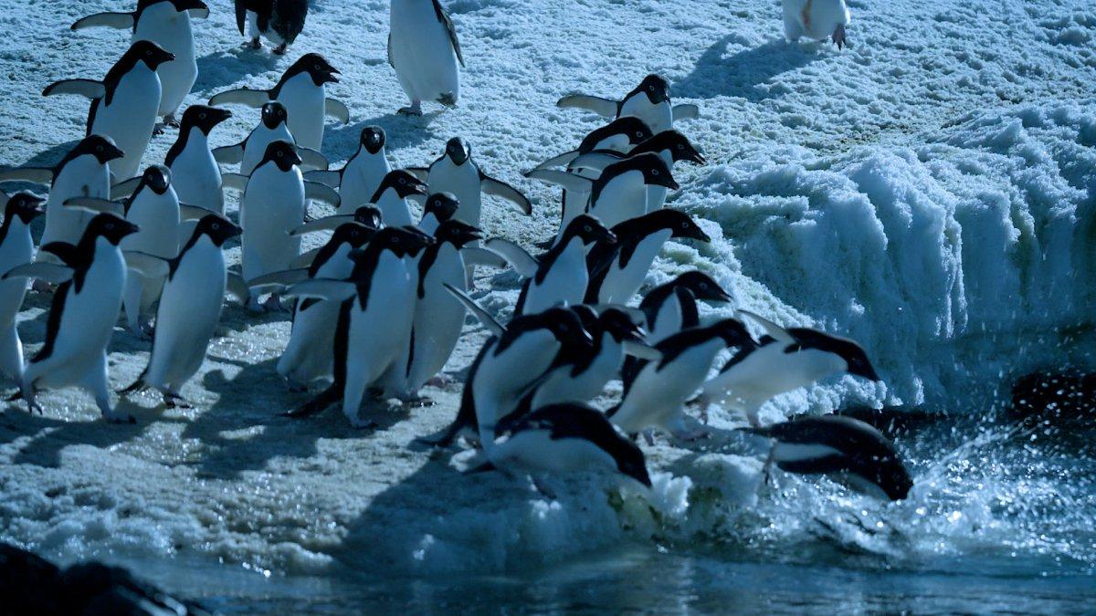 '.Antártida. Desafio Polar.'
