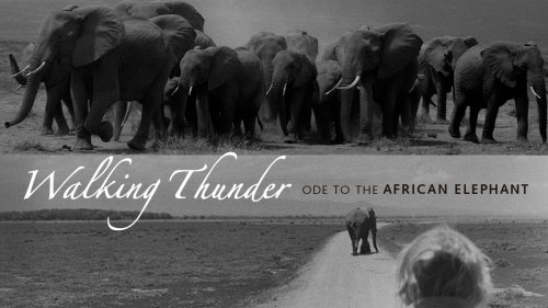 WALKING THUNDER: ODE TO THE AFRICAN ELEPHANT