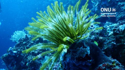 Adaptación basada en ecosistemas (Proyecto EbA)