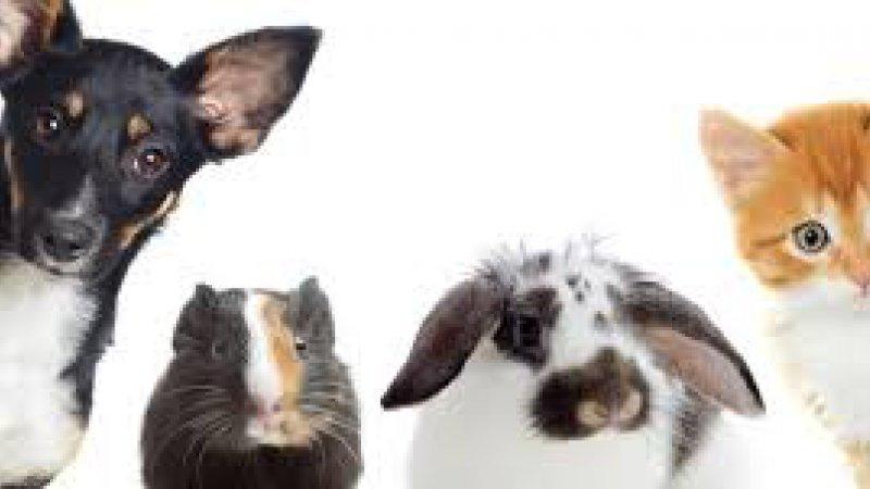 DERECHOS ANIMAL