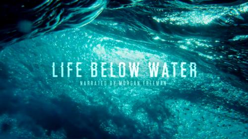Vida bajo el agua